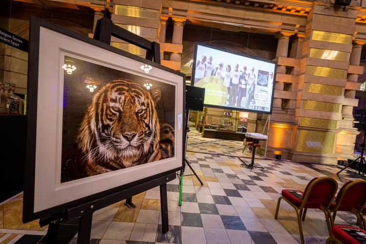 showing impressive photo of a tiger and event chairs, screen etc.
